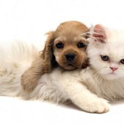 Студената война между кучетата и котките или какъв домашен любимец да си вземем?
