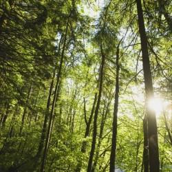 Сбъднати мечти и посадени гори