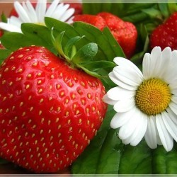 Вкусна ягодова диета