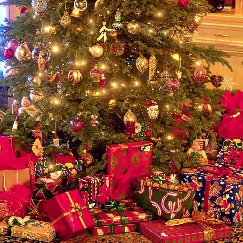 Каква елха да си купим за Коледните и Новогодишни празници
