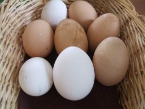 motat-n-eggs-004