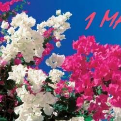 Ден на труда – 1ви май