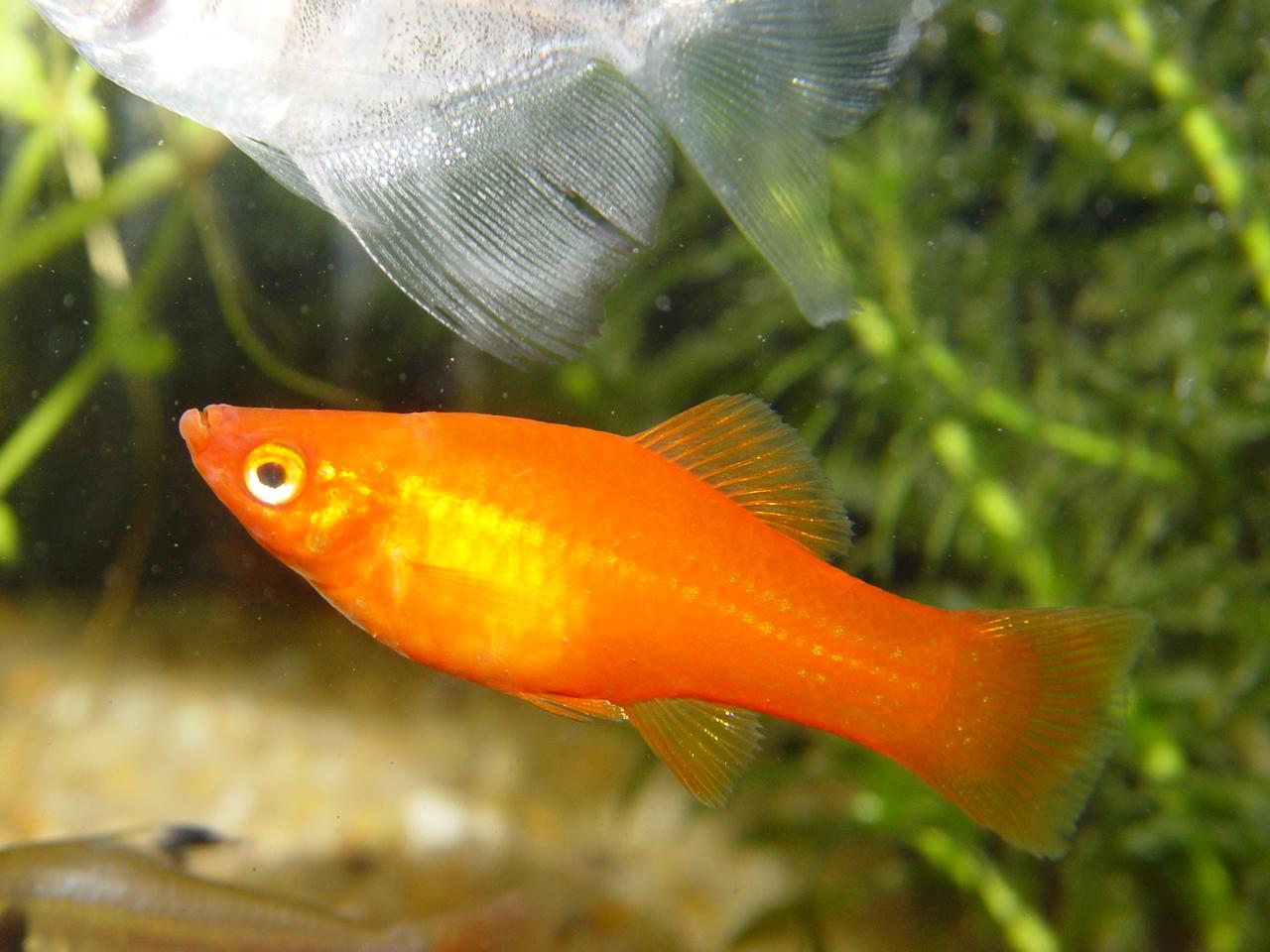 10 10 for Ornamental fish