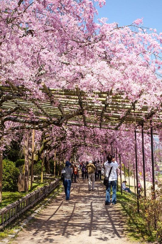 красота в Япония