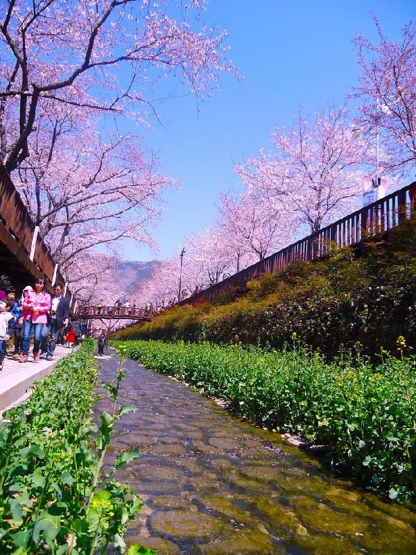 красота, Корея