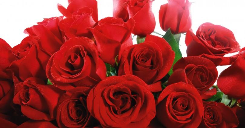 Засаждане на градински рози