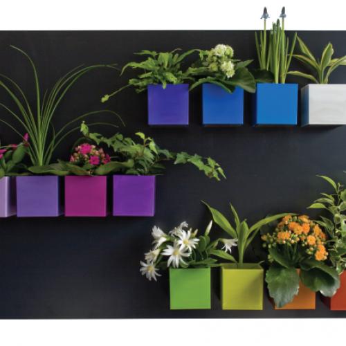 6 растения, които пречистват въздуха и подобряват фън шуй: