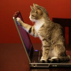 Как да се грижите за вашия лаптоп?