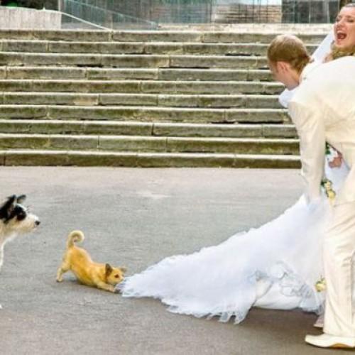 Компилация от сватбени фалове