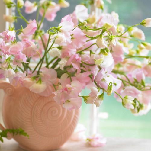 Стайните растения – естествени пречистватели на въздуха в помещенията