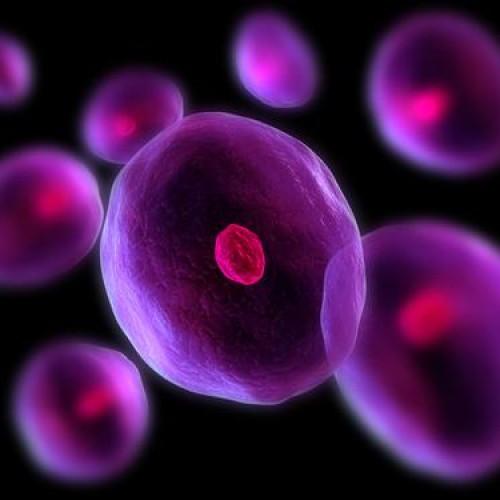 Стволовите клетки – прищявка или необходимост
