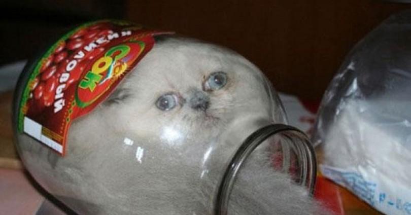 Смешни котки в кутии – If it fits, I sits