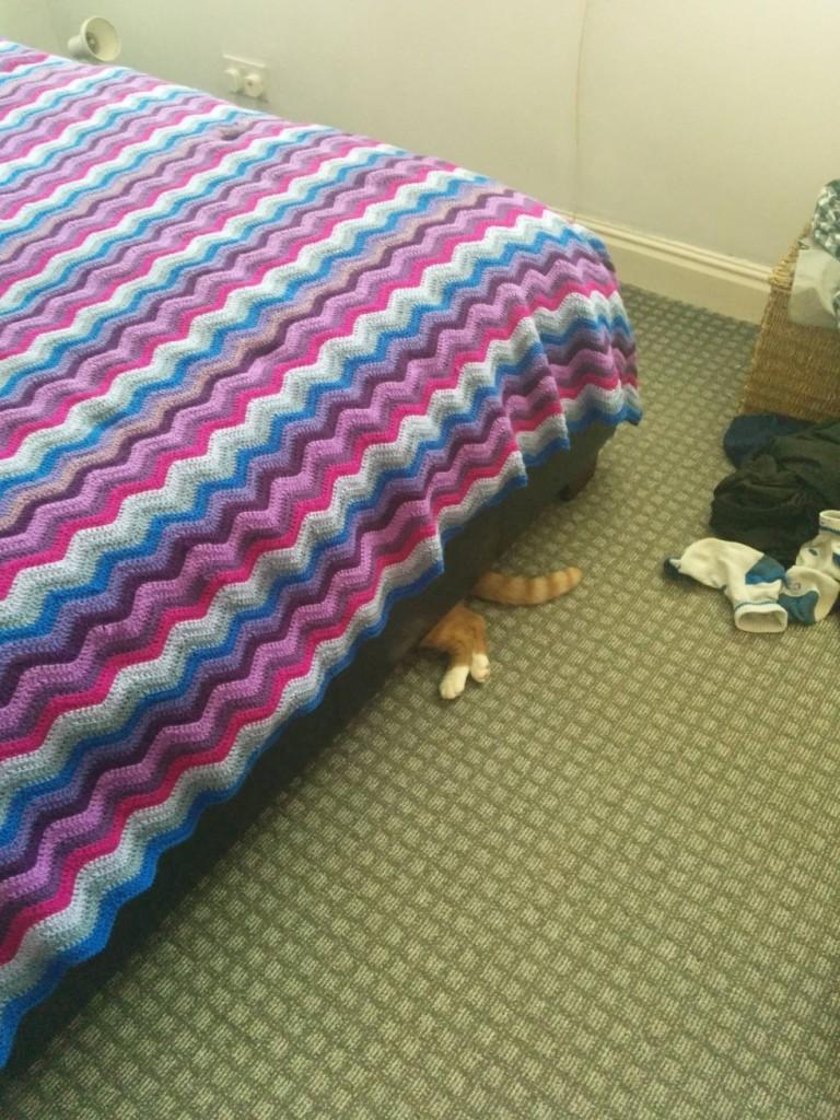 коте под легло