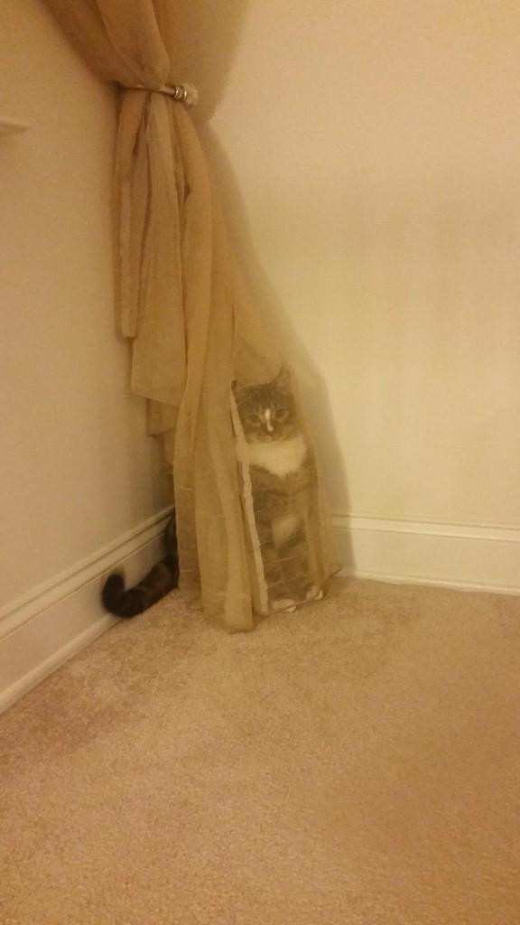 котка в перде