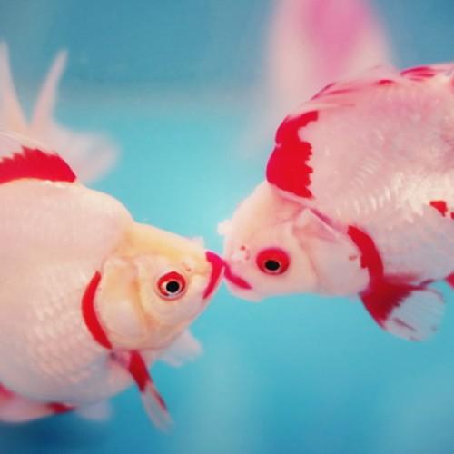 10 причини да си вземете декоративни рибки