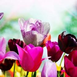 Някои популярни видове цветя и тяхната символика