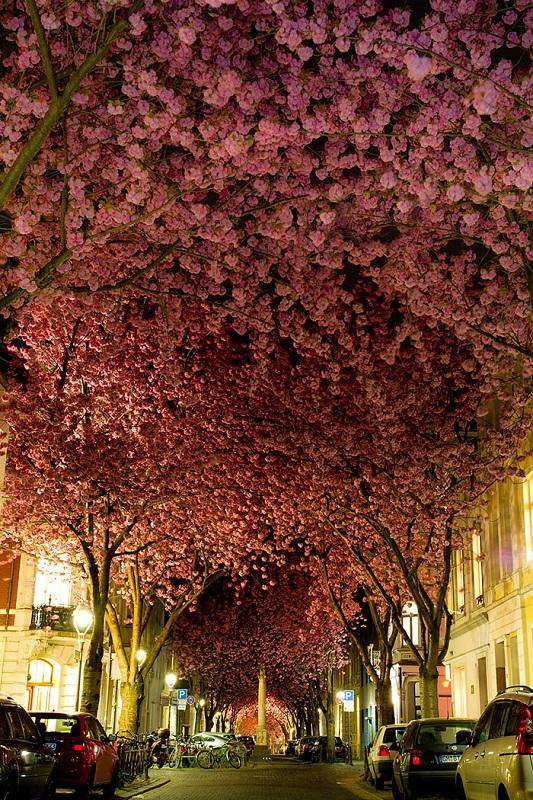 цветя в Германия