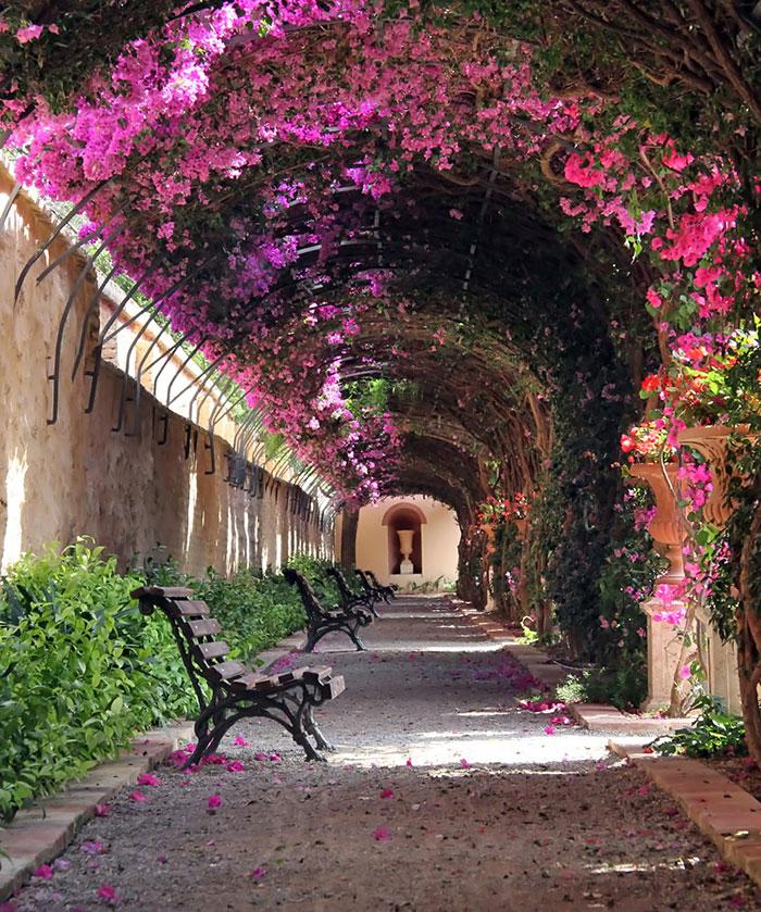 цветя Испания
