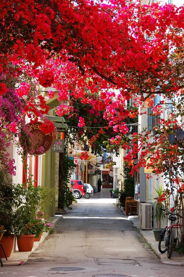 цветя Гърция